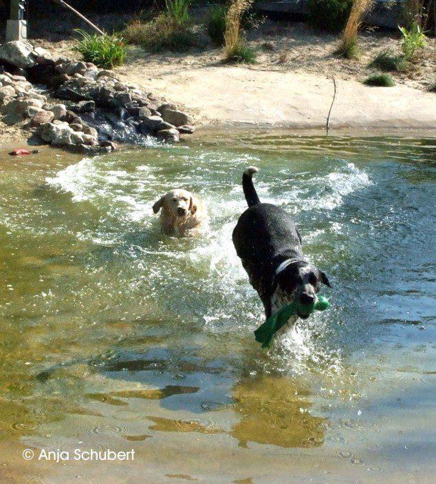 Hunde im Badeteich Hundeinternat Antonienwald